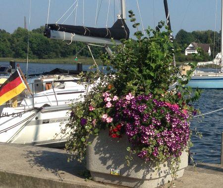 Bepflanzte Blumenkübel verschönerungsverein kappeln vorhaben 2009